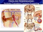 fisiologi pendengaran konduksi transduksi transmisi prossesing