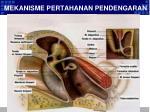 mekanisme pertahanan pendengaran