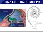 organ korti dan tonotopik