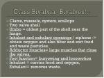 class bivalvia bivalves