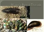 mussels byssal threads