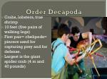 order decapoda