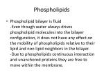 phospholipids2