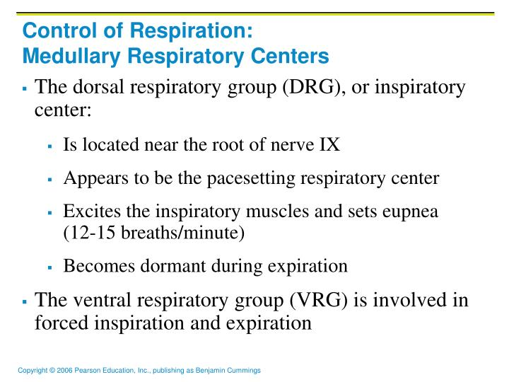 control of respiration medullary respiratory centers n.