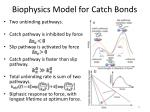 biophysics model for catch bonds