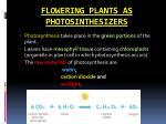 flowering plants as photosinthesizers