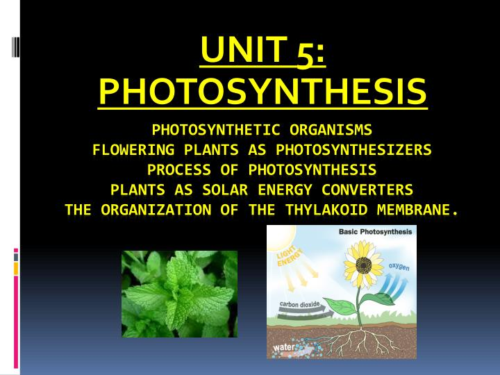 unit 5 photosynthesis n.
