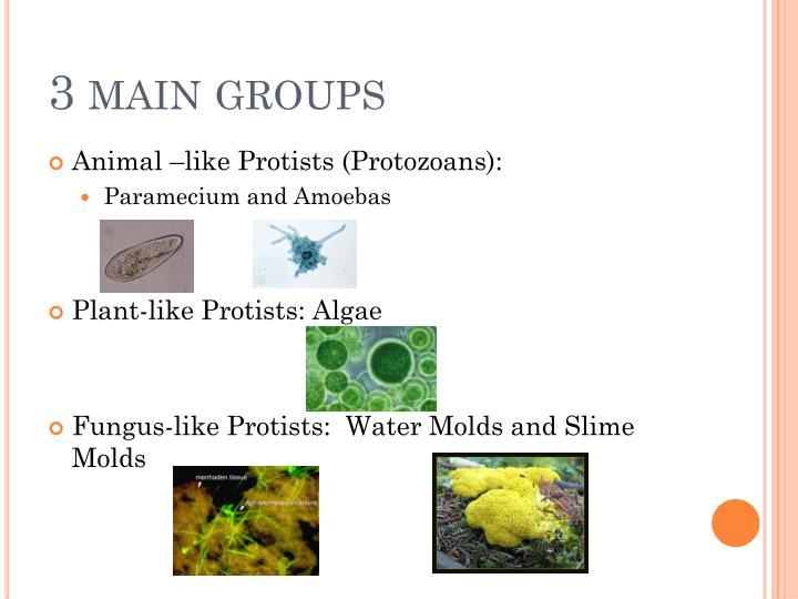 3 main groups