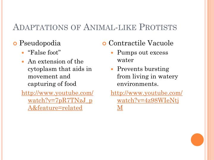 Adaptations of Animal-like
