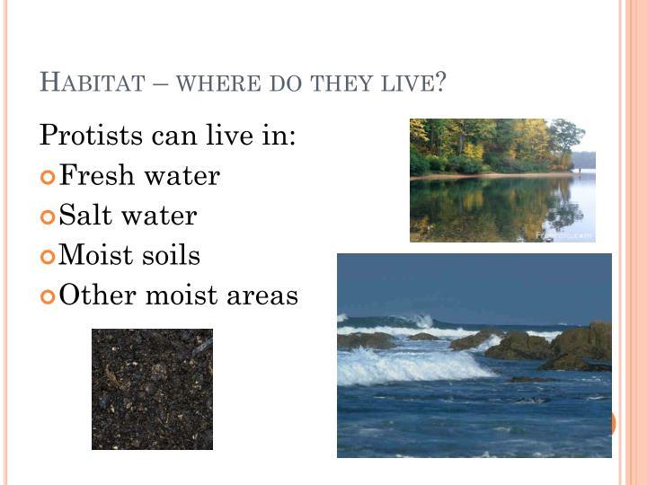 Habitat – where do they live?