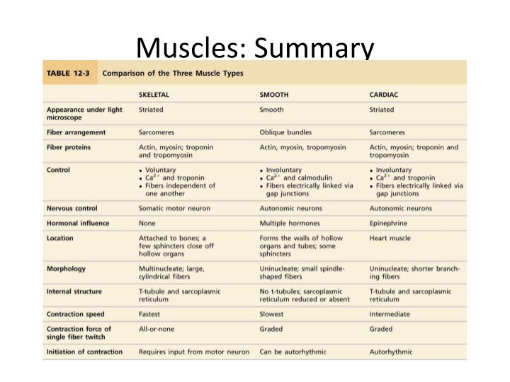 Muscles: Summary