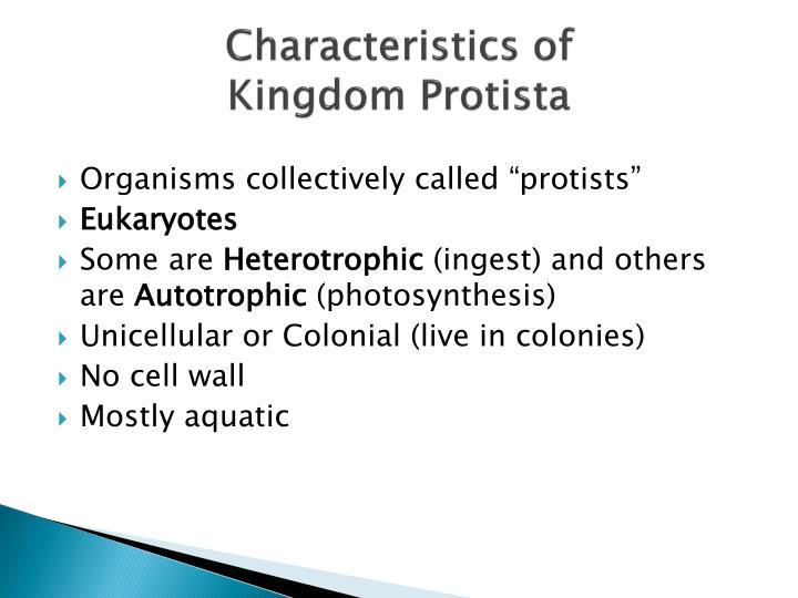 PPT - Kingdom Protista PowerPoint Presentation - ID:2191117