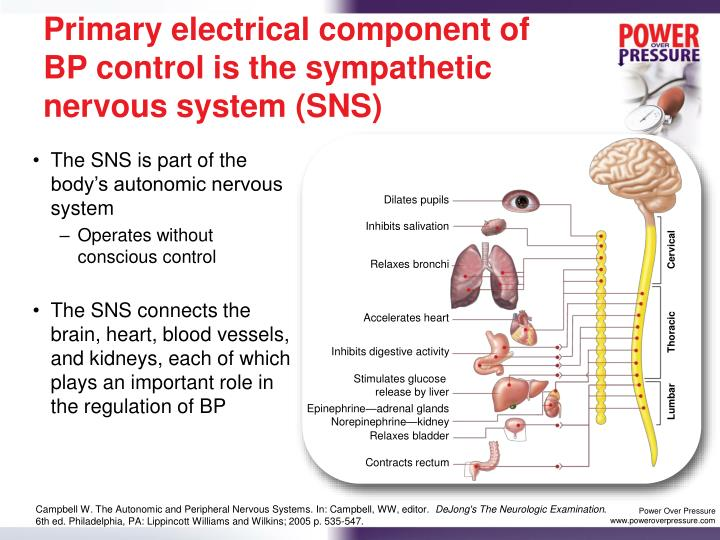 Primary electrical component of BP control is the sympathetic nervous system (SNS)
