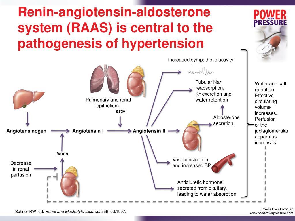 PPT - Treatment-Resistant Hypertension: Pathophysiology..