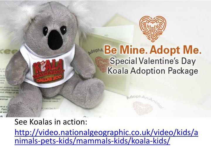 See Koalas in action: