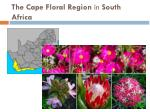 the cape floral region in south africa