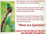 what are quetzals