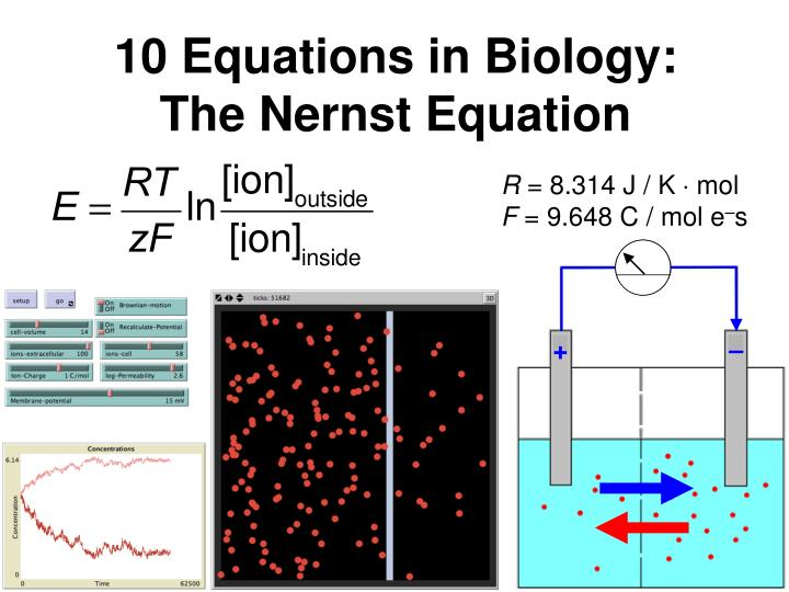 10 equations in biology the nernst equation n.