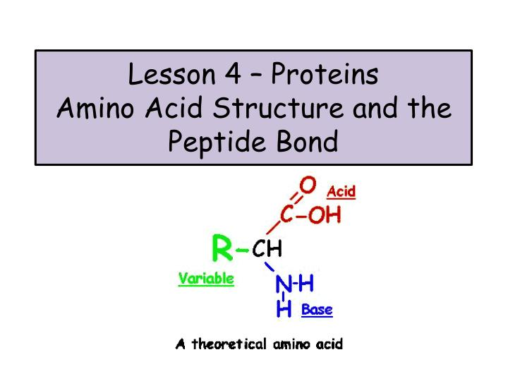 lesson 4 proteins amino acid structure and the peptide bond n.