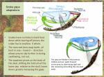 snake gape adaptations