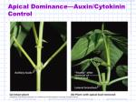 apical dominance auxin cytokinin control