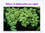 effect of gibberellin on right