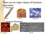there are six major classes of functions of proteins1