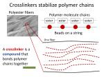crosslinkers stabilize polymer chains