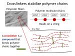 crosslinkers stabilize polymer chains1