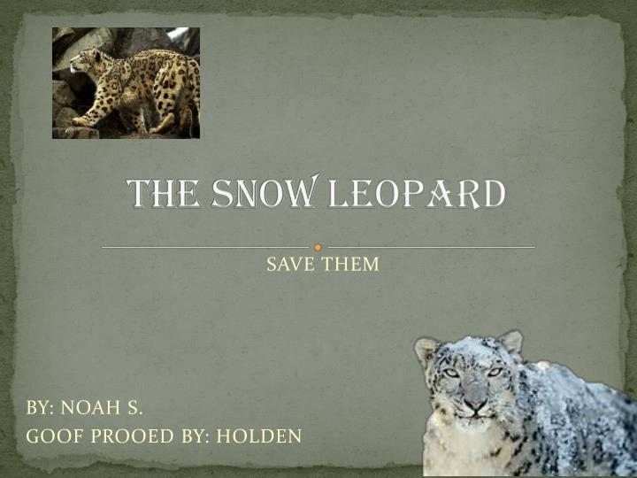 the snow leopard n.