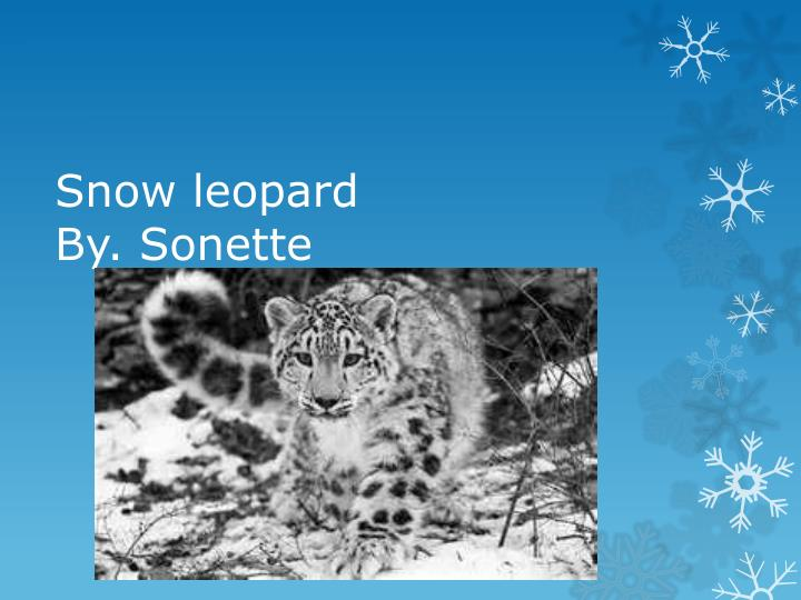 snow leopard by sonette n.