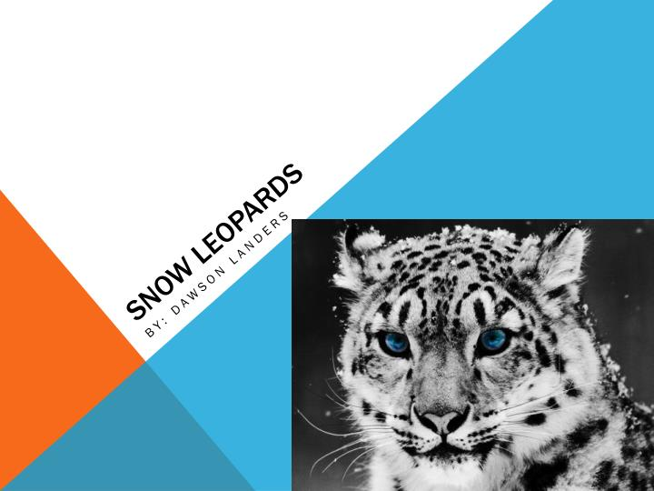 snow leopards n.
