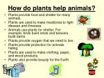 how do plants help animals