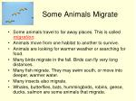 some animals migrate