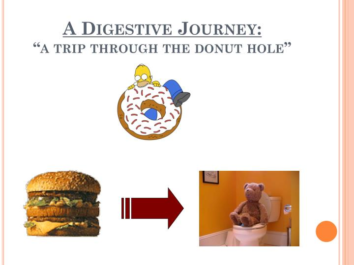 a digestive journey a trip through the donut hole n.