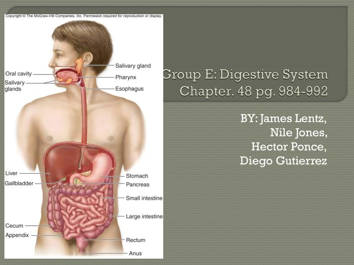 group e digestive system chapter 48 pg 984 992 n.