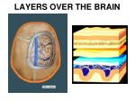 layers over the brain