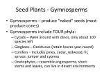 seed plants gymnosperms