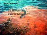dinoflagelado