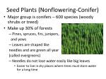 seed plants nonflowering conifer