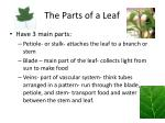 the parts of a leaf