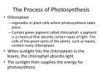 the process of photosynthesis1