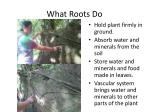 what roots do