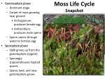 moss life cycle snapshot