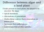difference between algae and a land plant