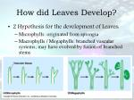 how did leaves develop