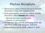 phylum bryophyta