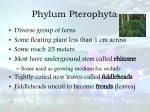 phylum pterophyta