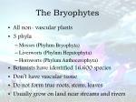 the bryophytes