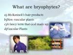 what are bryophytes